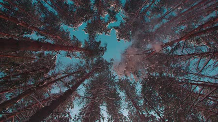 ambientalmente : majestic snowy forest in a Sunny winter day, the snow fall on the camera,slow motion, low angle, wide shot