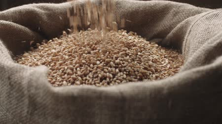 otruby : jute sack filling wheat that pours from above in slow motion