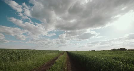 hajtások : rural road through green field of wheat flying, the road to heaven, the concept Stock mozgókép