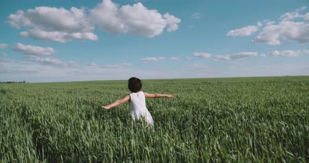 arejado : little girl in a white dress running through green wheat field, back view, slow motion, Steadicam shot Vídeos