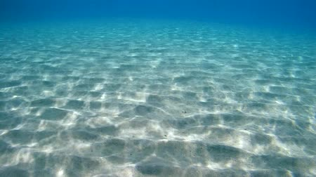 fundo : Underwater, the sunlight on the sandy bottom of the sea