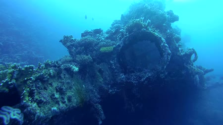 ss : wreck SS Carnatic, Red Sea, Sharm el Sheikh, Egypt, Sinai Stock Footage