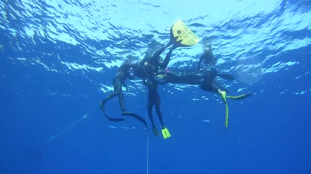 equipamentos esportivos : Freedivers resting on the buoy, Red Sea, Egypt