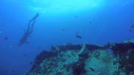 ss : Freediver dives on the wreck SS Thistlegorm, Red Sea, Sharm el Sheikh, Egypt, Sinai