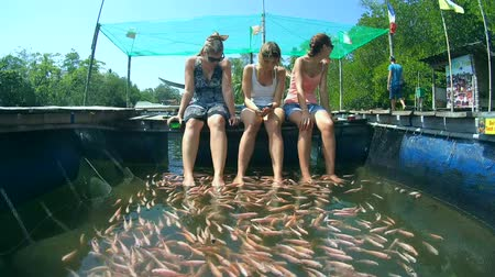 breeder : Three girls at the spa procedures, Mozambique tilapia (Oreochromis mossambicus) in a river clean feet, Hikkaduwa, Sri Lanka, South Asia