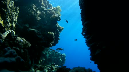 fenda : school of fish is in the crevice between the coral reefs in the canyon