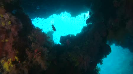 soldierfish : Young woman scuba diver views of a coral reef in the cave, Indian Ocean, Maldives Stock Footage