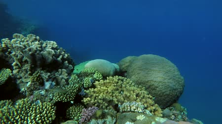 deceleration : beautiful coral reef resembling a well, Red sea, Marsa Alam, Abu Dabab, Egypt