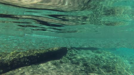 sprat : Needlefish floats under the surface of water and hunts on school of small fish Stock Footage