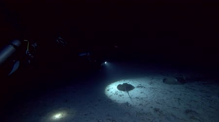 round stingray : Scuba diver shooting stingrays in the night