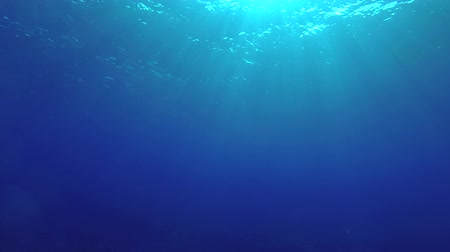 podsvícení : Sunlight rays shining through ocean surface, View from underwater