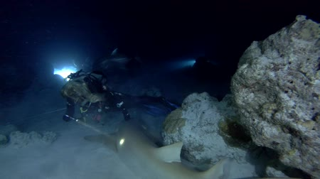 podwodny swiat : Female scuba diver looks at a nurse shark in the night. Giant sleepy shark or Tawny nurse shark (Nebrius ferrugineus), Indian Ocean, Maldives
