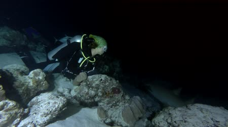 tawny : Female scuba diver at night. Giant sleepy shark or Tawny nurse shark (Nebrius ferrugineus), Indian Ocean, Maldives