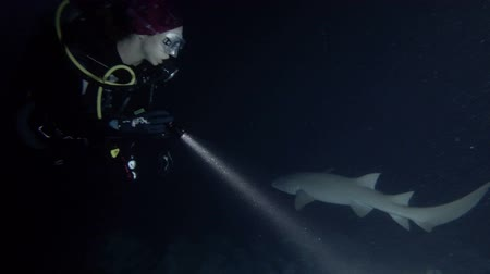 tawny : Female scuba diver in the night. Giant sleepy shark or Tawny nurse shark - Nebrius ferrugineus, Indian Ocean, Maldives