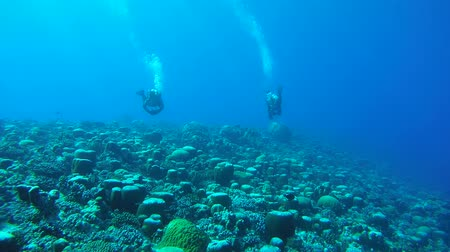maldivler : Two scuba diver swim on current, over a coral reef of an unusual formation - Indian Ocean, Fuvahmulah island, Maldives, Asia Stok Video