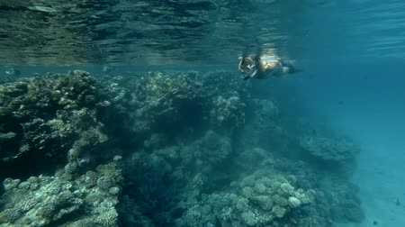 šnorchl : Woman in a mask and fins swim on the surface of water near coral reef (Low-angle shot, Underwater shot, 4K  60fps) Dostupné videozáznamy