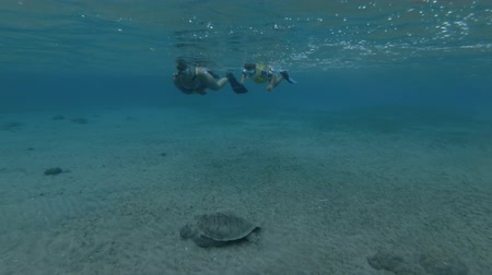 reptilia : Woman and little boy in mask, snorkel and fins swim and look at on Green sea turtle Chelonia mydas (underwater shot, 4K  60fps)