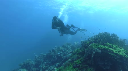mergulhador : Red Sea, Marsa Alam, Egypt