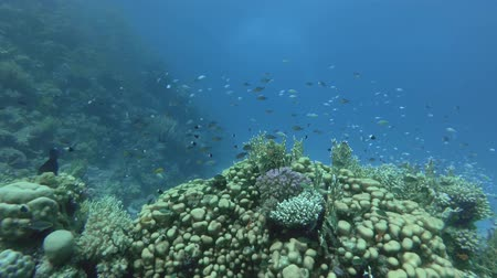 podwodny swiat : Coral Reef - Red Sea, Marsa Alam, Egypt