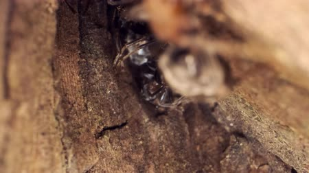 ant : A colony of ants on a tree trunk. Super macro 3: 1? 60fps