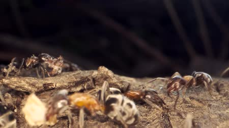 havlama : Ant colony on the root of a tree. Super macro? 60fps