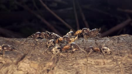 empilhamento : Ant colony on the root of a tree. Super macro? 60fps