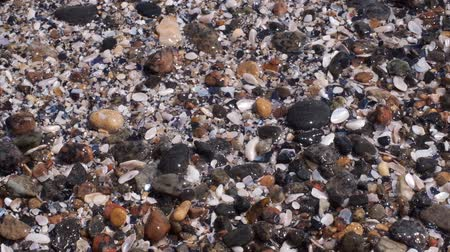 alga : Sideways movement on beautiful pebble shore. Camera moves sideway to the right side. Close-up, Full HD - 60fps