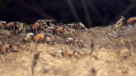 vanity : Ant colony on the root of a tree. Super macro? 60fps