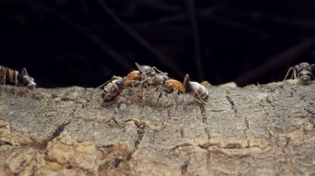 Ant colony on the root of a tree. Super macro? 60fps