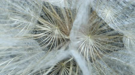 Details of seed-head flower. Rotating seedhead, Extreme close up. Rotation 360 degrees