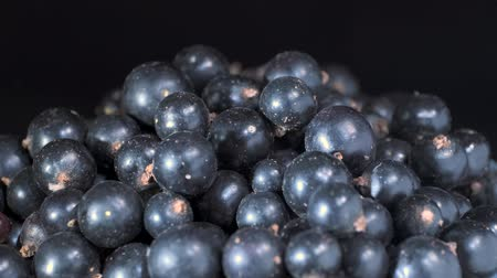 fruity garden : Rotate of fresh blackcurrant on black background. Close up. Camera rotation 360 degrees. Black currant or blackcurrant (R bes n grum) Stock Footage