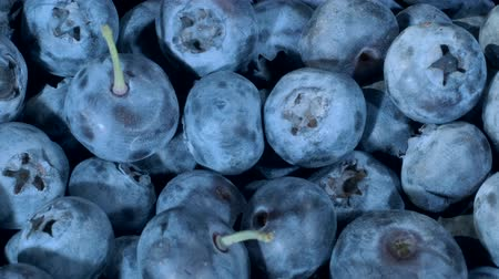 fruity garden : Detail of Blueberries. Macro trucking shot. Camera moving forwards. Close-up, Top view. Bog bilberry, bog blueberry, bilberry or western blueberry (Vaccinium uliginosum) Stock Footage
