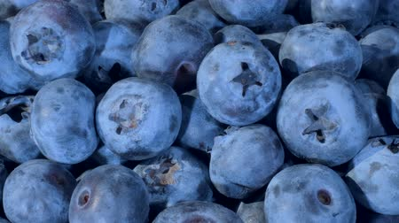 fruity garden : Detail of Blueberries. Macro trucking shot. Camera moves sideway to the right side. Close-up, Top view. Bog bilberry, bog blueberry, bilberry or western blueberry (Vaccinium uliginosum)