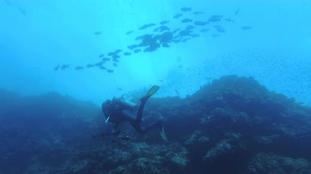 Scuba diver swims along the coral reef wall, school of fish swims above it, Low-angle shot