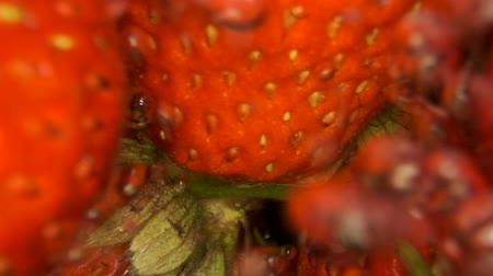 fruity garden : Juicy ripe strawberries washed water with splashes and bubbles. Extreme close-up. Slow motion, Underwater split level