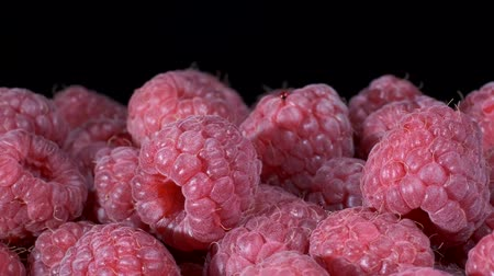 rubus occidentalis : Rotate of fresh raspberries on black background. Close-up, Camera rotation 360 degrees. European raspberry or red raspberry (Rubus idaeus)