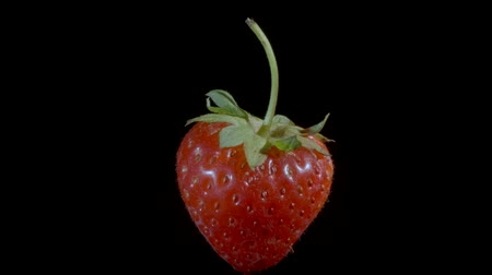 fruity garden : Levitating red strawberry. Isolated on a black background. Closeup, Camera rotation 360 degrees. Stock Footage