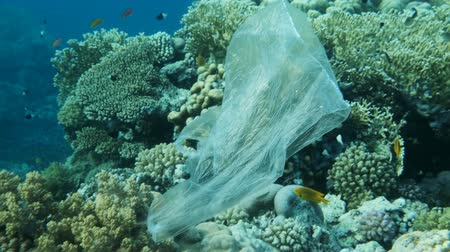znečištěné : Slow motion, Plastic pollution in the ocean: Plastic bag floats next to the beautiful coral reef with school of tropical fish in the blue water. Plastic garbage environmental pollution problem Dostupné videozáznamy