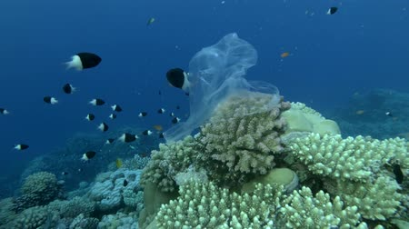 znečištěné : Plastic bag hanging on beautiful coral reef and swaying in the waves, a school of tropical fish swims nearby, on background blue water. Underwater plastic pollution of the oceans.