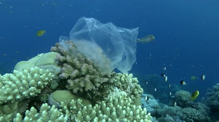 oceanos : Plastic bag hanging on beautiful coral reef and swaying in the waves, a school of tropical fish swims nearby, on background blue water. Underwater plastic pollution of the oceans.