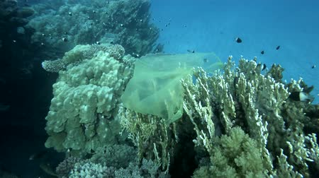 oceanos : Slow motion, Yellow plastic bag hanging on coral reef, a school of fish swims nearby in the blue water. Plastic pollution of the oceans. Plastic garbage environmental pollution problem Vídeos