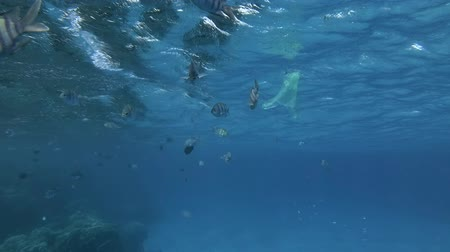oceány : Slow motion, yellow plastic bag slowly swims with school of tropical fish under surface in blue water. Underwater plastic pollution of the oceans.