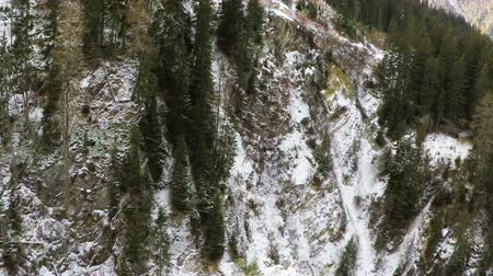 Panorama Shot Of Snow Covered Forest During Winter 4K Stock Footage