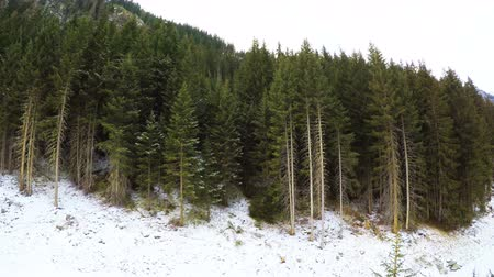 Panorama Shot Of Snow Covered Forest During Winter 4K Wideo
