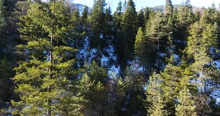 High Angle View Of Snow Covered Forest Taken From Drone 4K