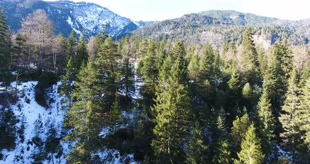 Scenic View Of Snow Covered Forest Taken From Drone 4K