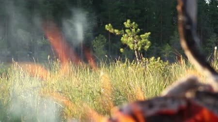 dry zone : The fire in the forest.