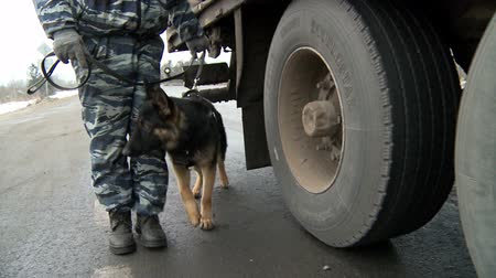 searches : A policeman with a dog conduct a physical inspection of trucks.Service dogs.
