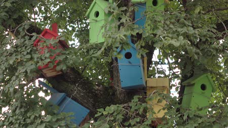 housing problems : The birdhouses .Colorful wooden bird tree house.