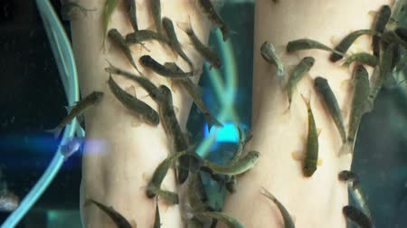 garra : Close up of female feet in aquarium with Garra rufa fish.